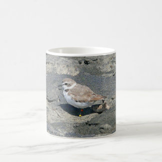 Snowy plover classic white coffee mug