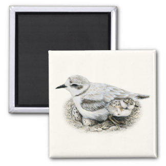 Snowy Plover with Chick and Eggs Magnet