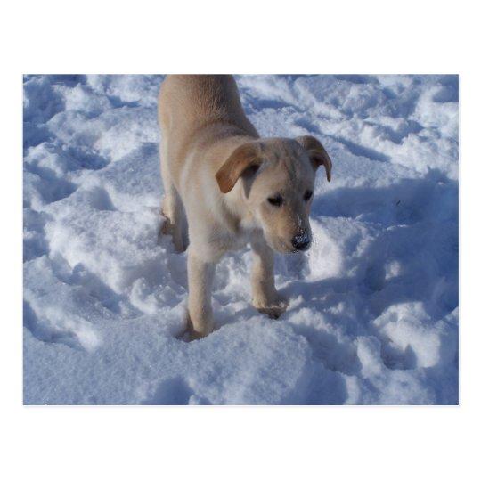 snowy pup Postcard