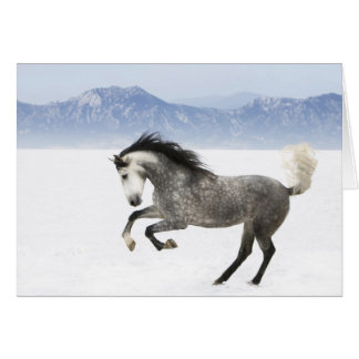 Snowy Romp Horse Greeting Card