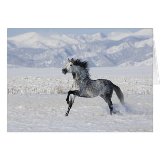 Snowy Stallion Running Horse Greeting Card