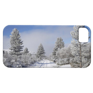 Cambrian Gifts - Cambrian Gift Ideas on Zazzle.ca