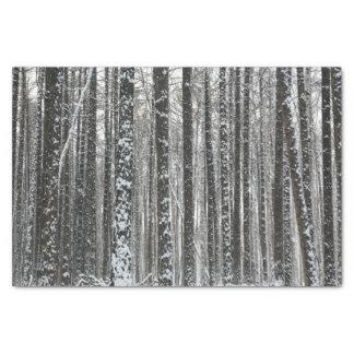 Snowy Tree Trunks Tissue Paper