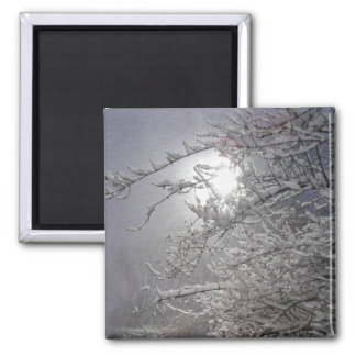 snowy trees magnet