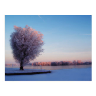 Snowy Trees Postcard