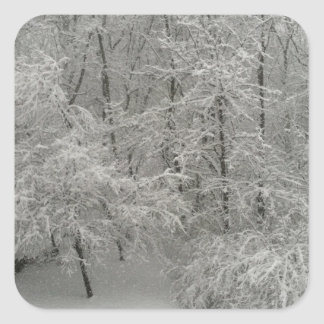 Snowy Trees Square Sticker