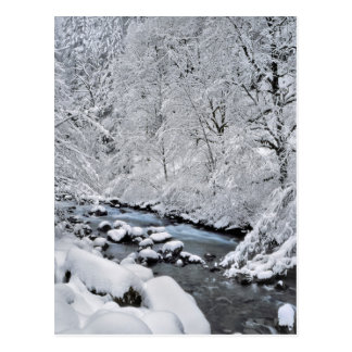 Snowy white creek scenic, Oregon Postcard