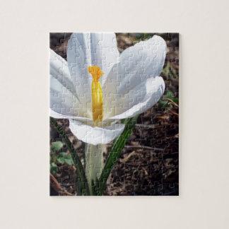 Snowy White Crocus Blossom Puzzle