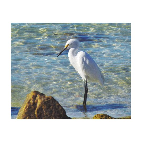 Snowy White Egret in Surf Canvas Print