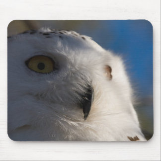 Snowy White Owl Mouse Pad