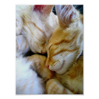 Snuggle Kittens Poster