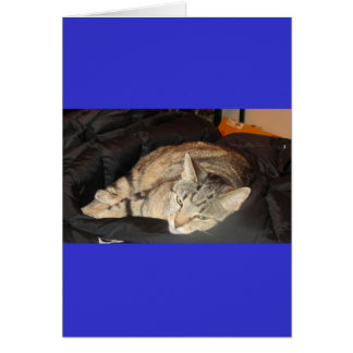 Snuggle Time For Indigo Greeting Card