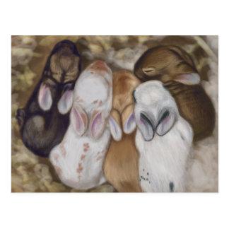 Snuggly Baby Bunnies Postcard