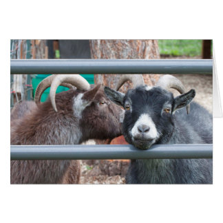 Snuggly Goats! Card