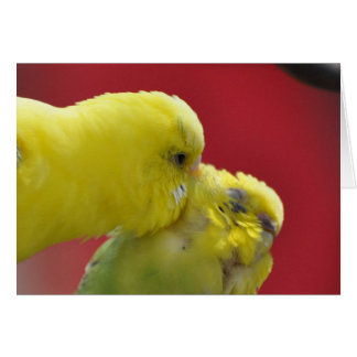 Snuggly Pair of Budgies Card