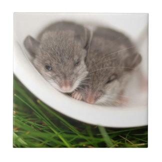 So Sleepy Baby Mice Tile