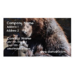 Soaking Bear Pack Of Standard Business Cards