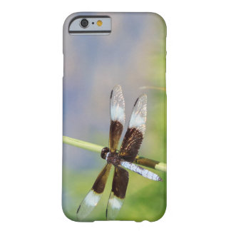 Soaking in the sun. barely there iPhone 6 case