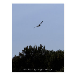 Soar Like an Eagle Postcard