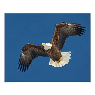 Soaring Eagle Photo Print