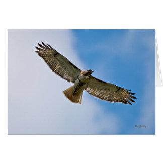 Soaring Hawk Note Card