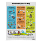 Socializing Your Dog Poster