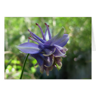 Soft Blue Columbine Card