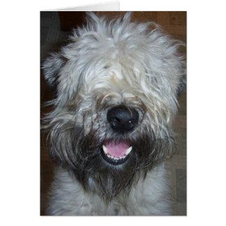 Soft Coated Wheaten Terrier Card