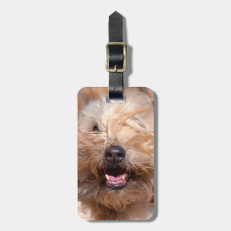 Soft Coated Wheaten Terrier portrait Luggage Tag