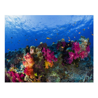 Soft corals on shallow reef, Fiji Postcard