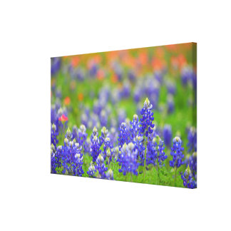 Soft Focus Bluebonnets Canvas Print