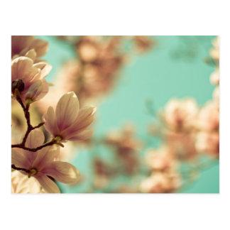 Soft focus magnolia postcard