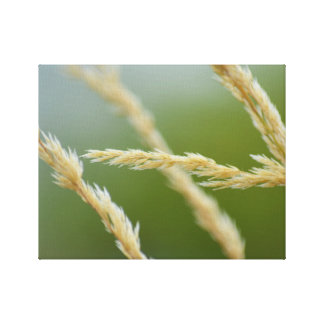 Soft Grasses wrapped canvas print