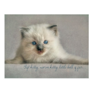 Soft kitty, ragdoll postcard