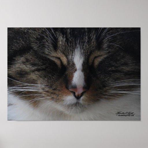 Soft Kitty, Warm Kitty... Poster