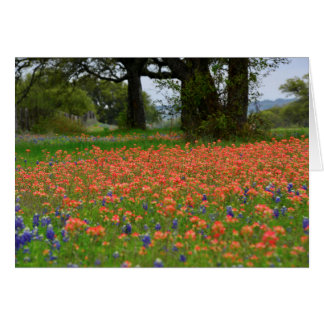 Soft Light Indian Paintbrush Card