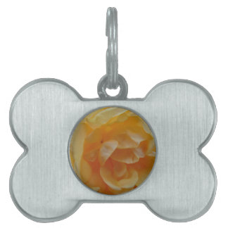 Soft Orange Rose Pet ID Tags