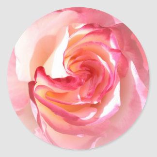 Soft Pink and White Rose Round Sticker