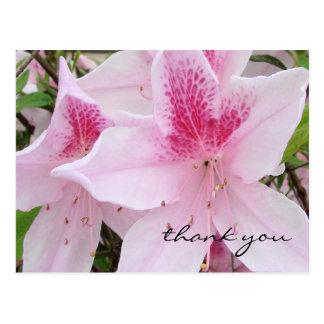 Soft Pink Azaleas - Thank You Postcard