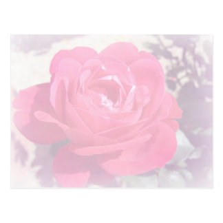 Soft Pink Haze Rose Postcard