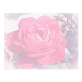 Soft Pink Haze Rose Post Card