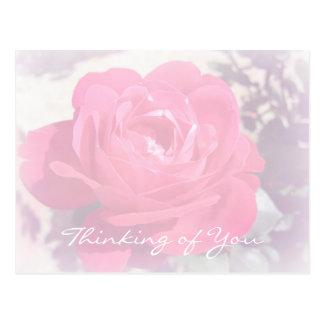 Soft Pink Haze Rose Postcards