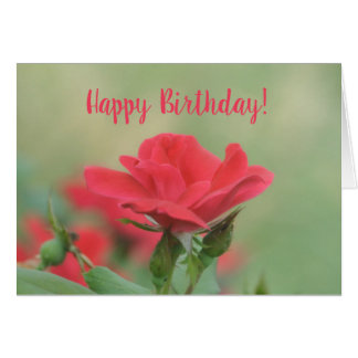 Soft Pink Rose Birthday Card