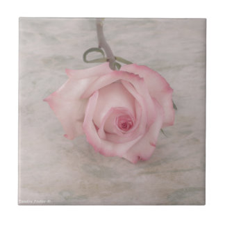 Soft Pink Rose Flower Tile