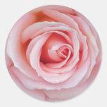 Soft Pink Rose Sticker