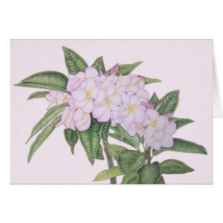 Soft Plumeria Card