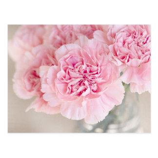 Soft Powder Pink Flower Postcard