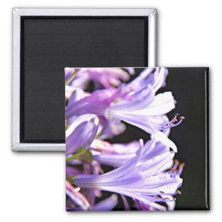Soft Purple Agapanthus Flowers - Lily of the Nile Magnet