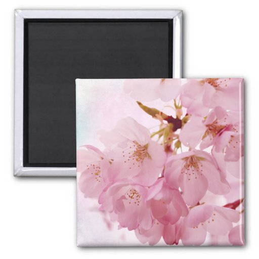 Soft Vintage Pink Cherry Blossoms Magnet