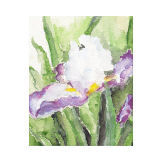 Soft Watercolor Iris Canvas Print